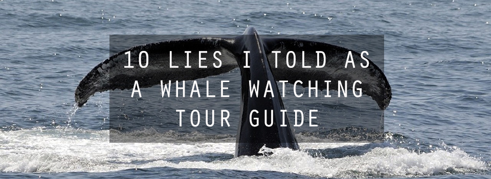 10 Lies I Told as a Whale Watching Tour Guide